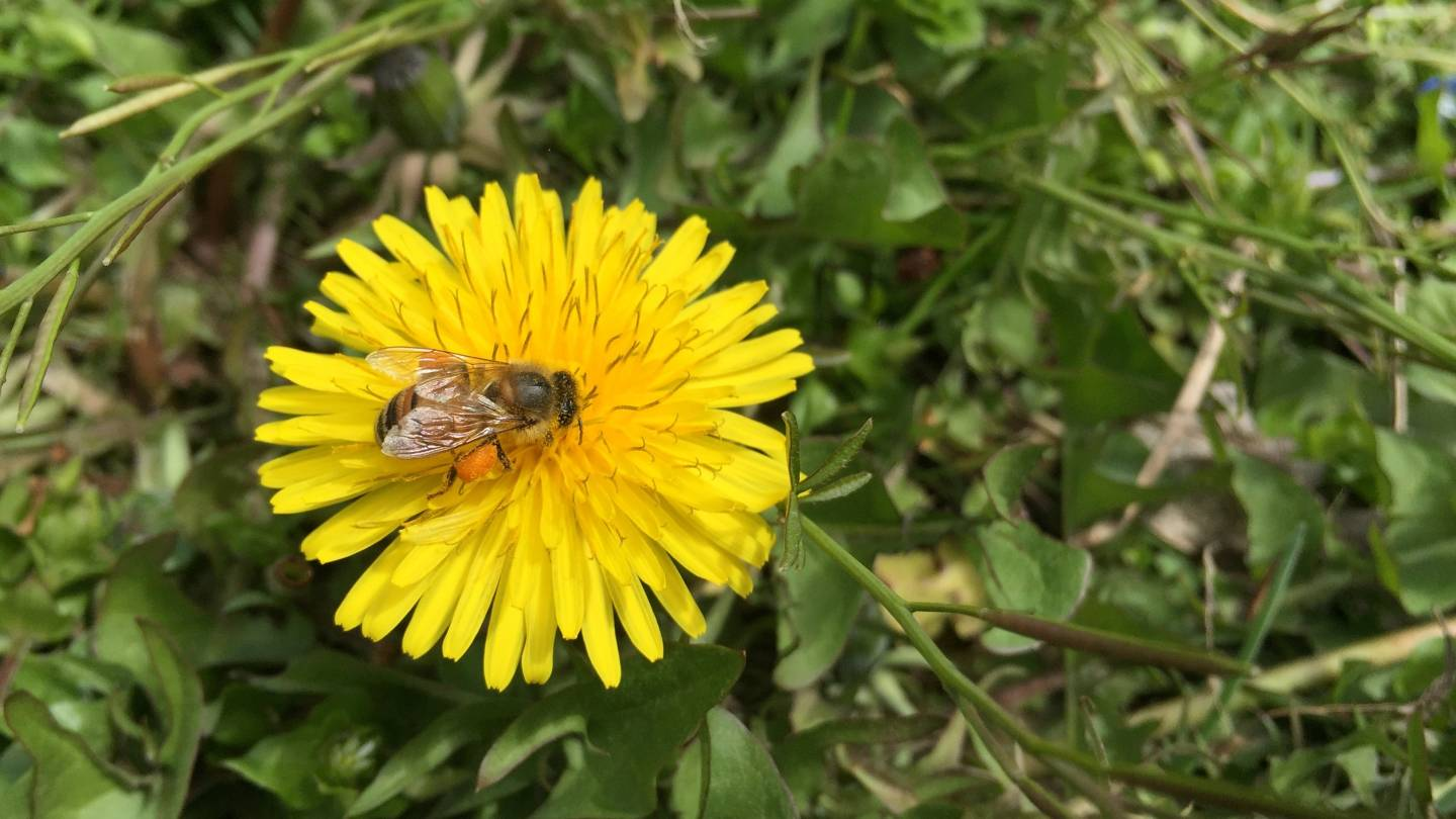 Home and Garden Giant Ditches Class of Pesticides That May Harm Bees
