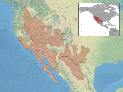 Side-blotched lizards range over much of the western United States and into Mexico.