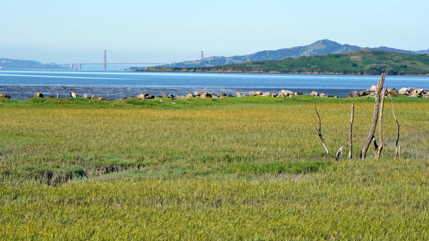 Measure AA Asks Bay Area Residents to Help Protect Against Sea Level Rise
