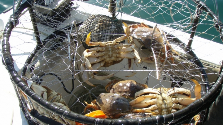 Crab Season Faces Delays as Fishermen Sue Oil Industry Over Climate Change