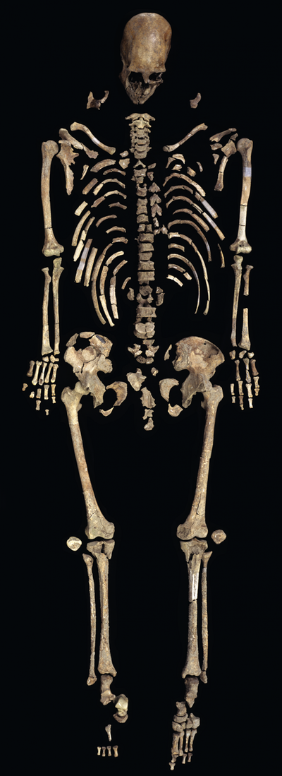The skeleton of Kennewick Man is represented by nearly 300 bones and bone fragments.
