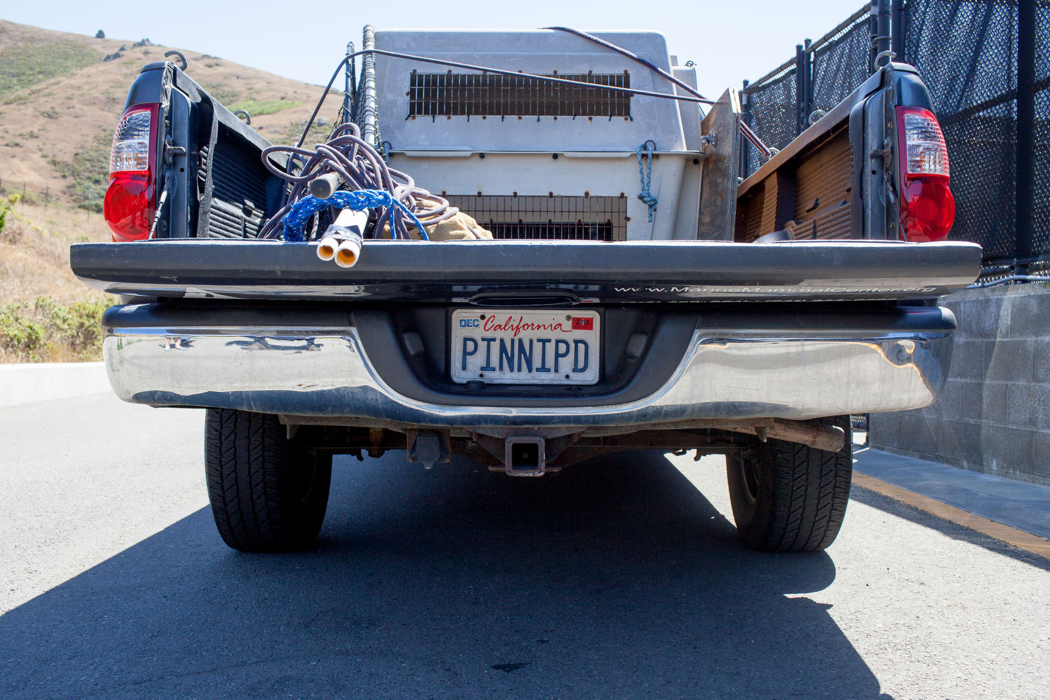 A pickup truck used by Marine Mammal Center staff to rescue injured wildlife sports a custom vanity plate. The full word—pinniped—means fin- or flipper-footed, and refers to seals, sea lions, and walruses.