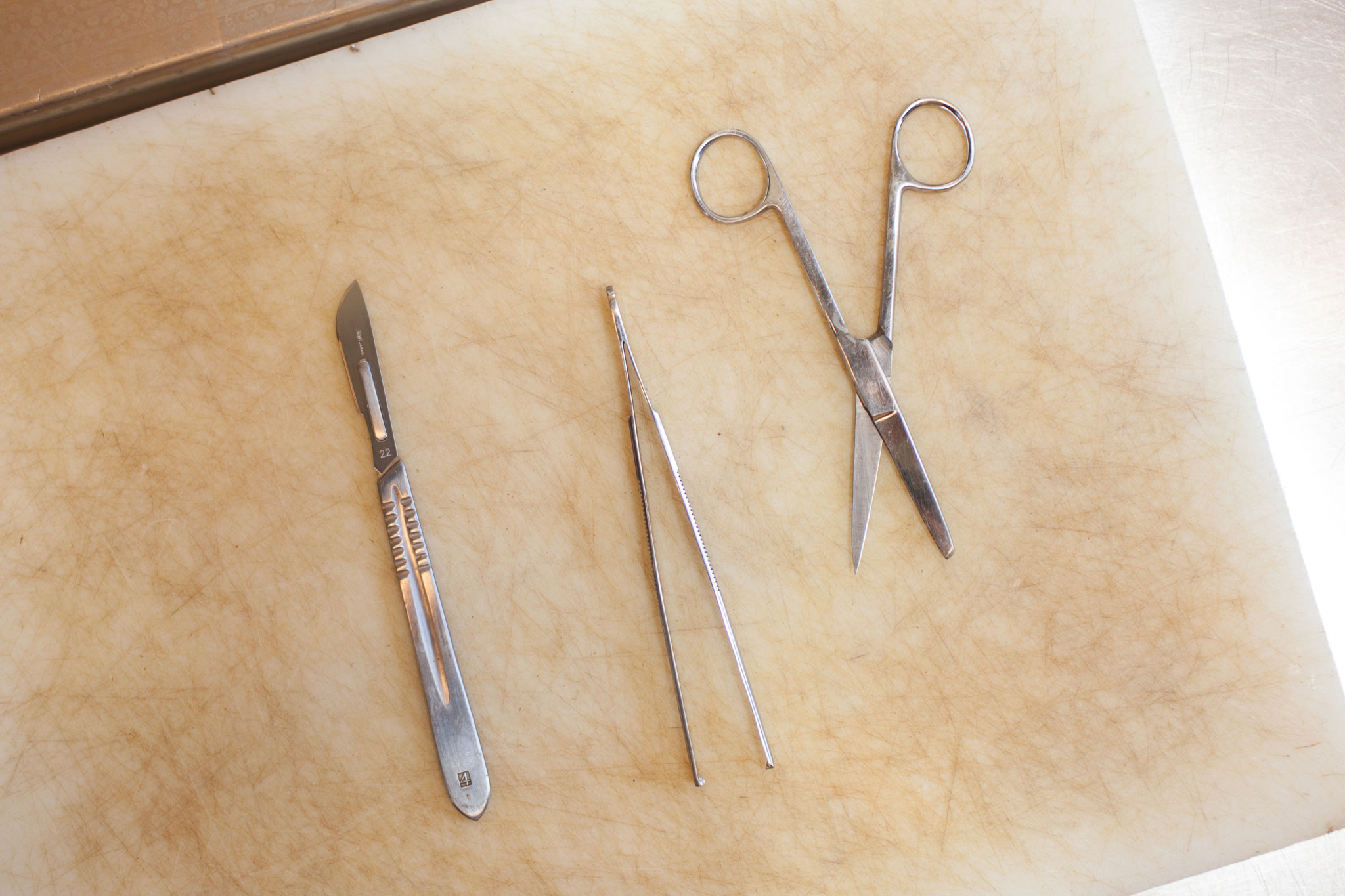 A variety of surgical instruments lie ready for use in the necropsy procedure. The Marine Mammal Center shares tissue samples with researchers from around the world.