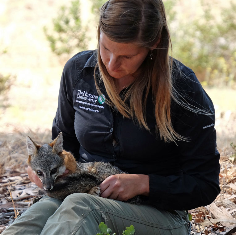 Christina Boser examines a Channel Island fox.