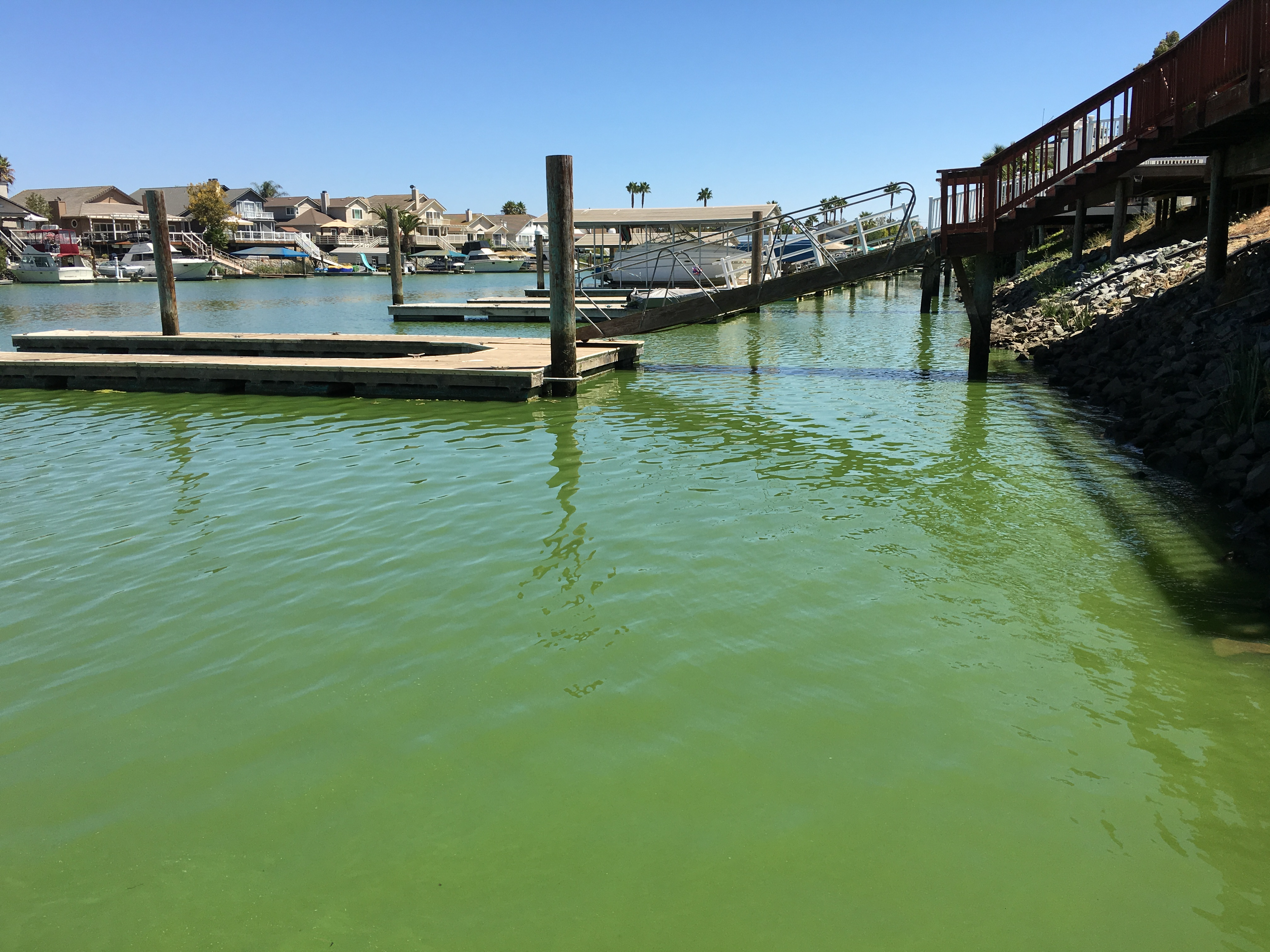 The docks behind homes at Discovery Bay are quieter than usual due to fears of blue green algae toxins.