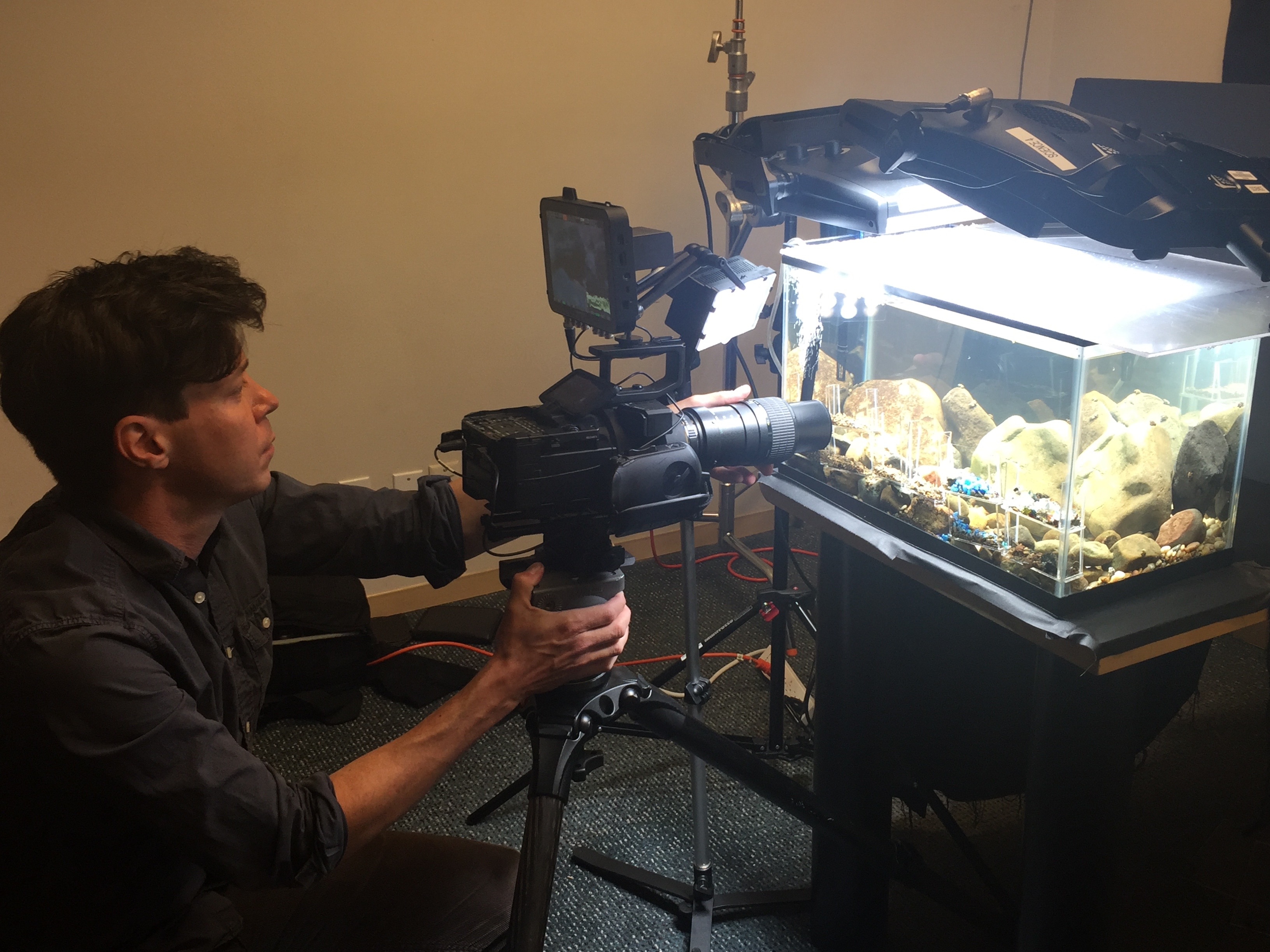 Man films caddisfly aquarium.