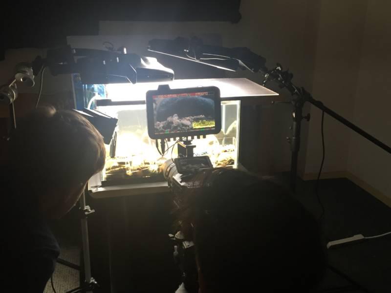 Camera filming aquarium