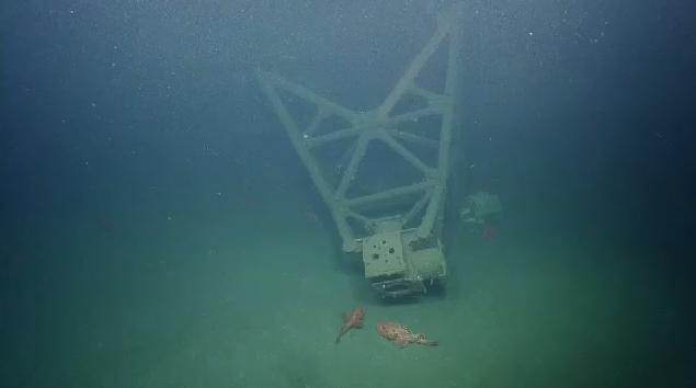 Nautilus_underwater