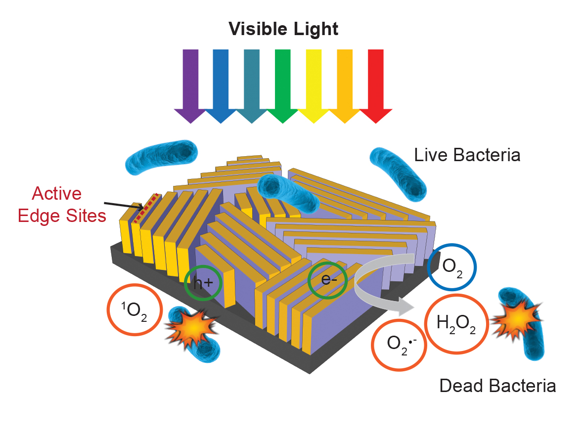 Inside the device, molybdenum disulfide is arranged like a maze and topped with a thin layer of copper. Light falling on the walls triggers the formation of hydrogen peroxide and other disinfecting chemicals that kill bacteria.