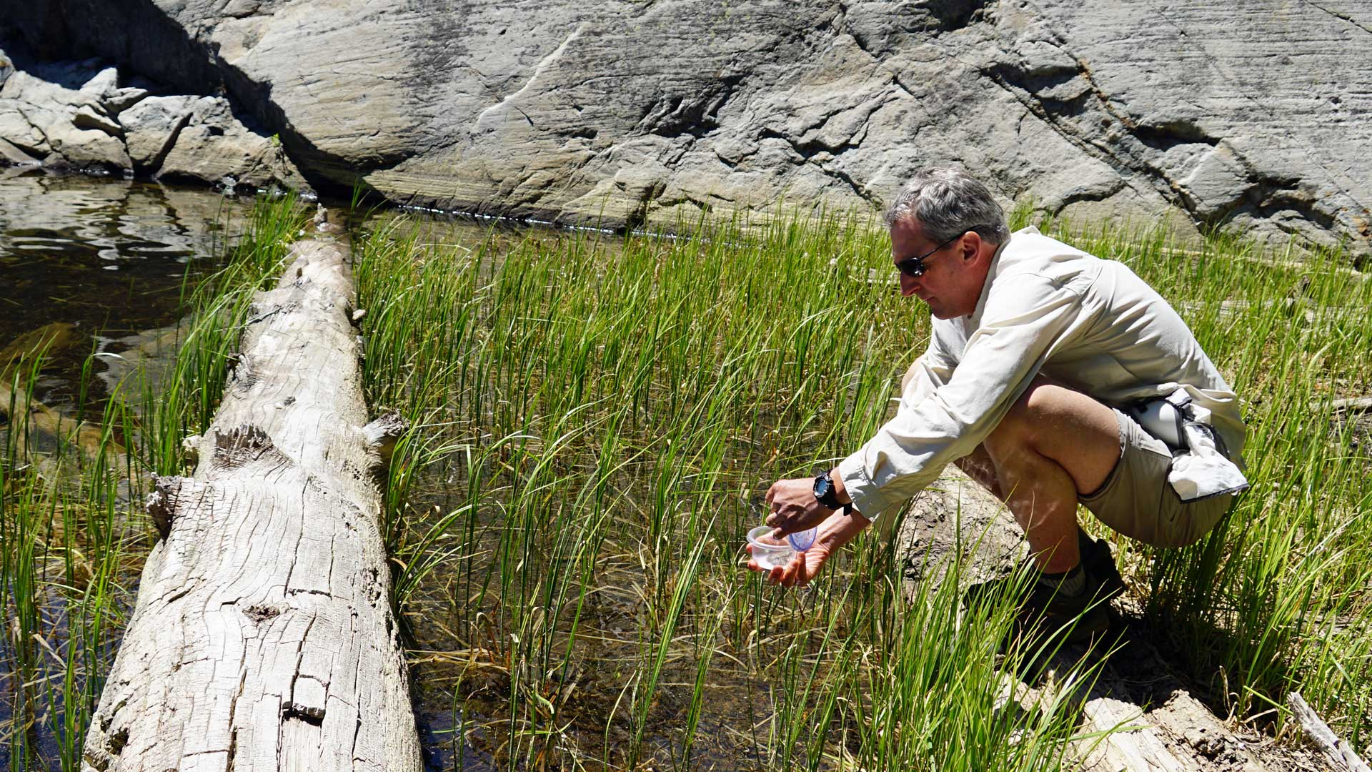 Roland Knapp releases a yellow-legged frog in a high alpine lake, south of Lake Tahoe.