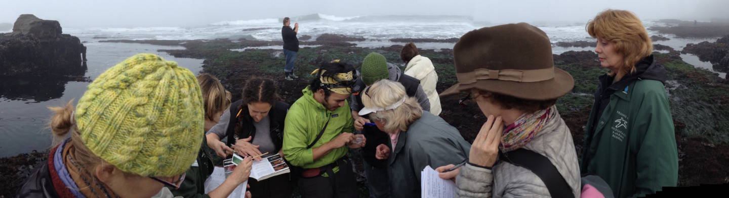 The author (foreground, with brown hat) joins volunteers to count sea stars and other denizens of the tidepools along the San Mateo County coast. Liam O'Brien