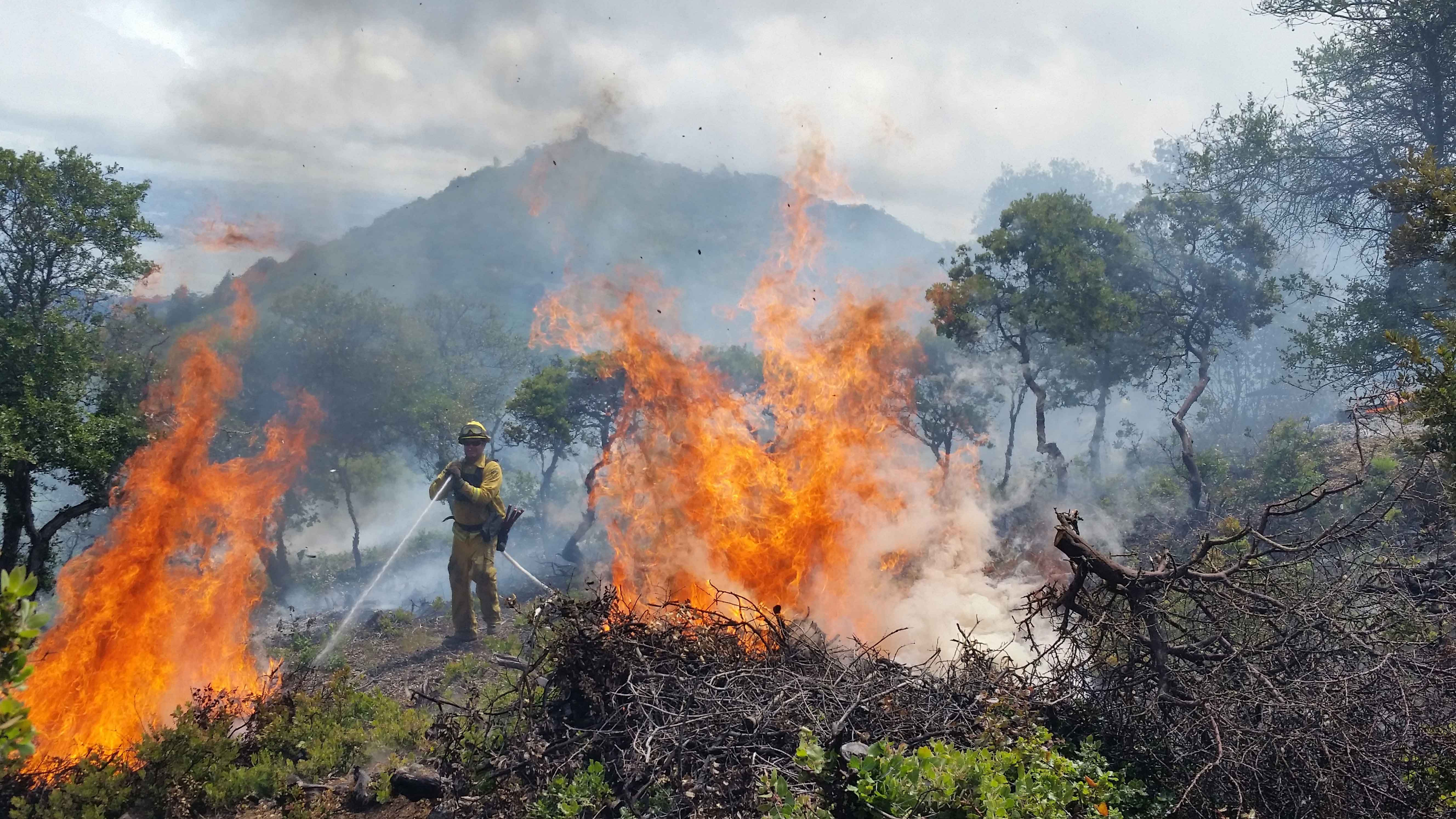 On Mt. Tam, a prescribed burn decreases fuel loads in chaparral and scrub oak communities.