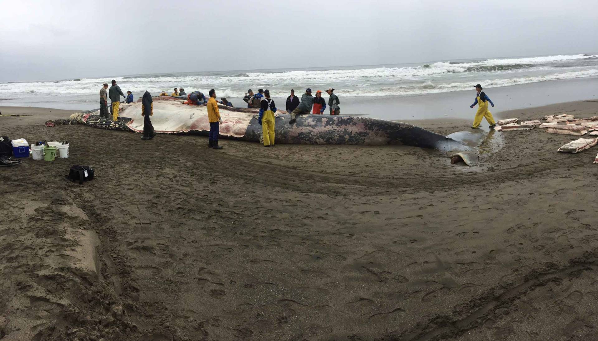 The rotting carcass smells like overly cooked mussels and clams. Lindsey Hoshaw/KQED