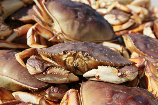 Crab for Thanksgiving? Don't Count on It. Commercial Season Delayed