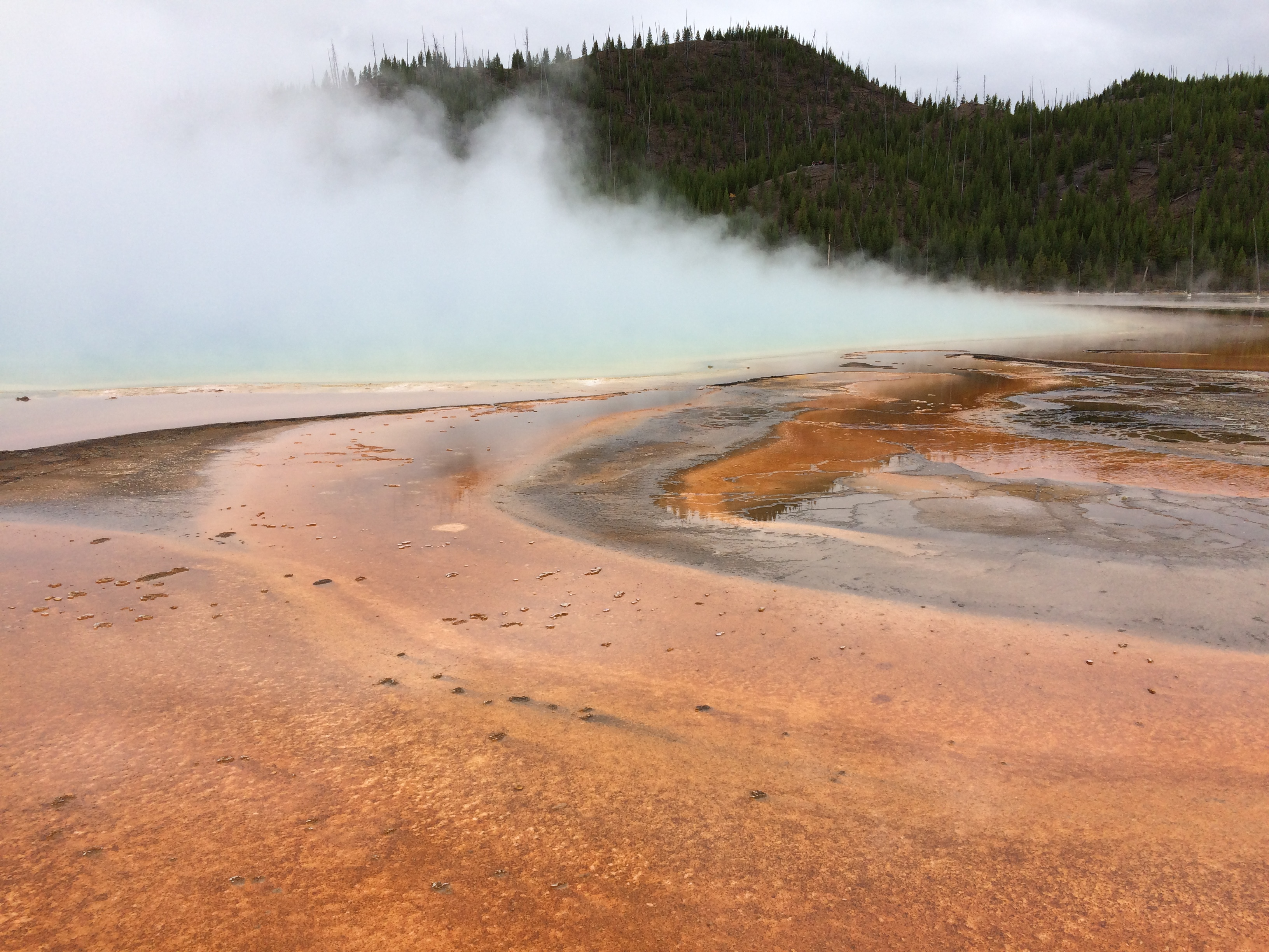 An orange bacterial mat in Yellowstone National Park. Steam rises from a hot spring in the background.