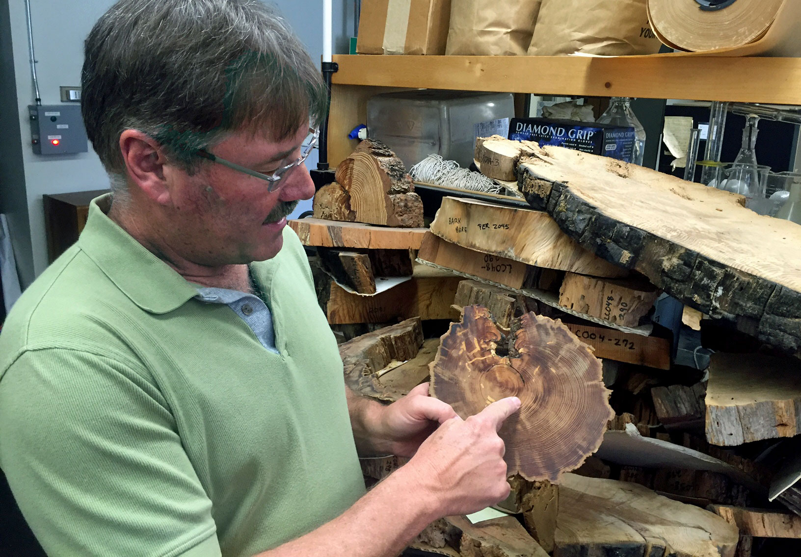 UC Berkeley scientist Scott Stephens shows the fire history in a tree cross-section.