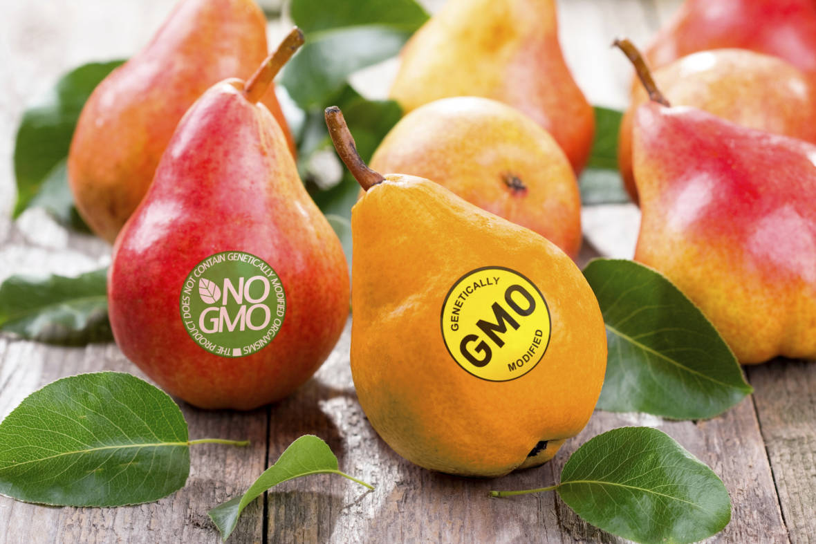 GMO Crops Headed for Ban in Sonoma County