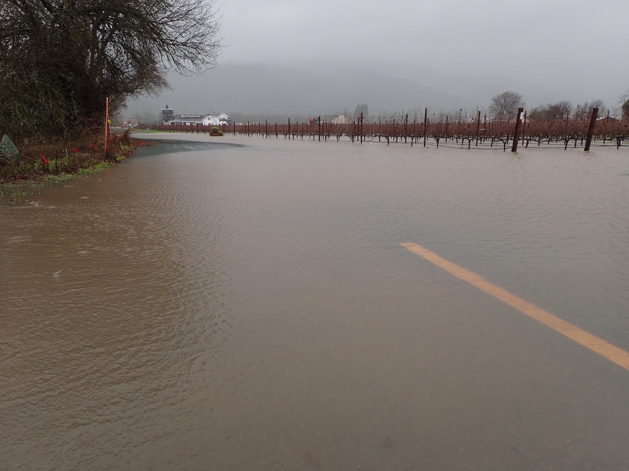 Flooded vineyards along Hwy 29 in the Napa Valley. Standing water like this will slowly sink in, helping to recharge groundwater aquifers.