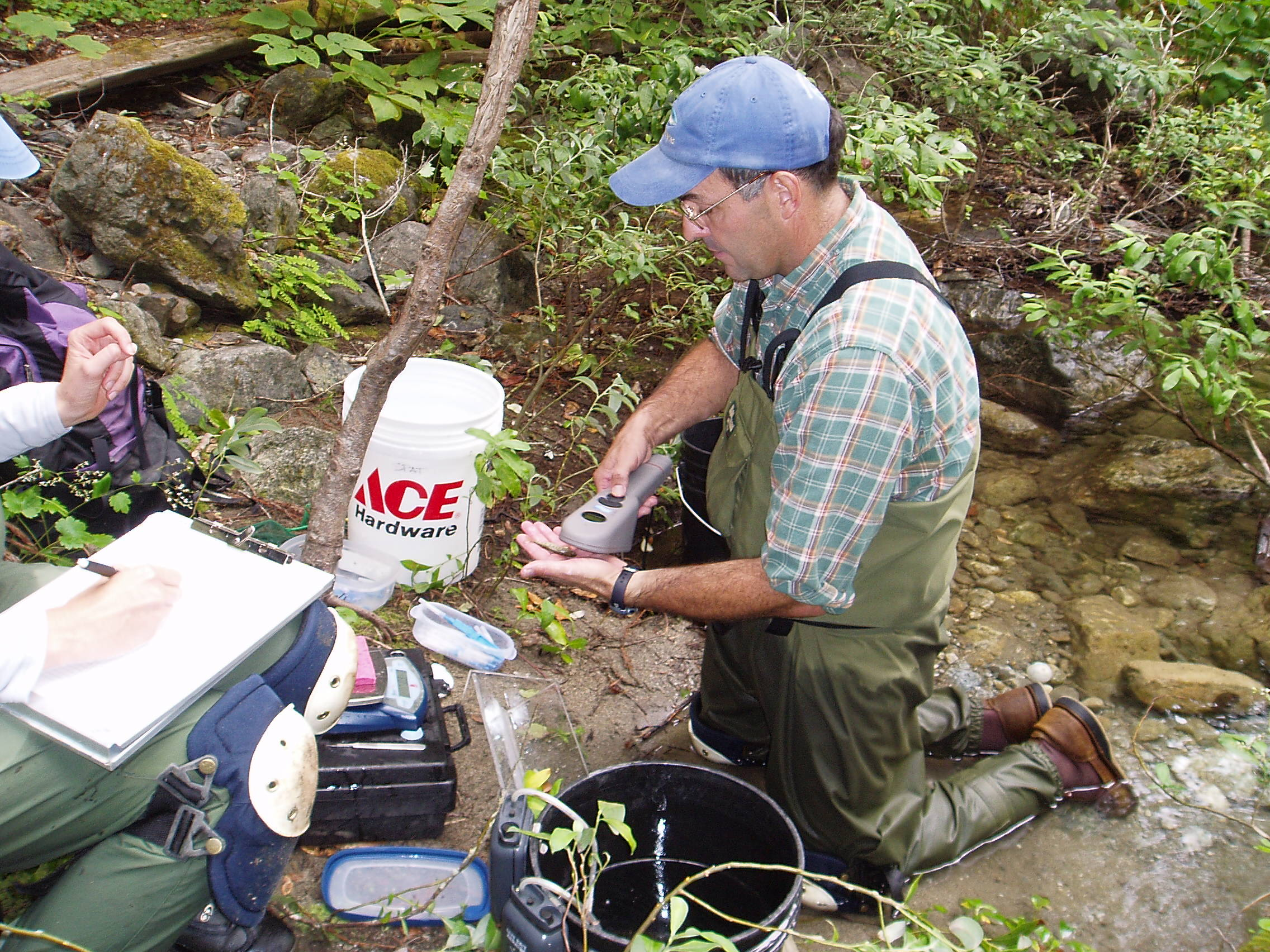 Fisheries biologist Tommy Williams scans a juvenile steelhead trout for a passive integrated transponder (PIT) tag. PIT tags uniquely identify the fish and in mark-and-recapture studies, they allow scientists to estimate fish survival rates and population size.