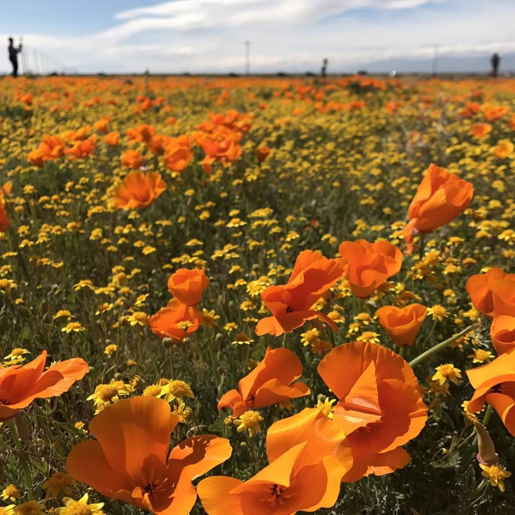PHOTOS: Your Pics of California's 'Super Bloom'