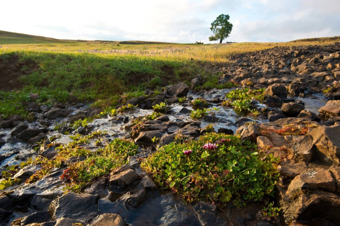 A stream at Table Mountain, a basaltic plateau near Oroville, California.   Florence Low/California Department of Water Resources
