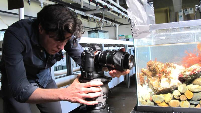 Josh Cassidy films a moss crab