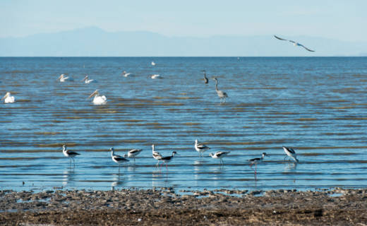 Aquatic birds congregate at Red Hill Bay