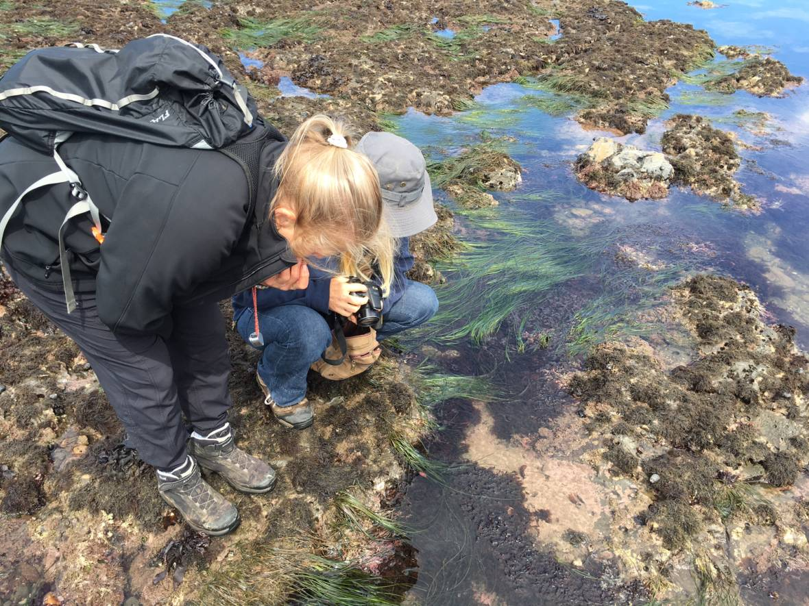 Science for the People: Grab Your Phone and Help Snap Pictures of Coastal Biodiversity
