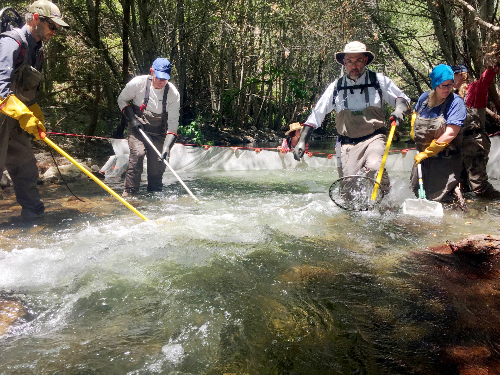 From left to right: Scientists Dave Rundio, Nate Mantua, Tommy Williams, Laeticia Wilkins, and Heidi Fish. Rundio and Williams use electrofishers to catch steelhead trout on the Carmel River in Monterey County. Lindsey Hoshaw/KQED