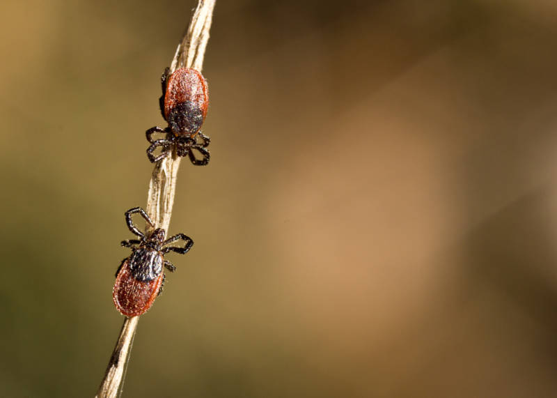 Know How to Protect Yourself From Lyme Disease on Bay Area Hikes