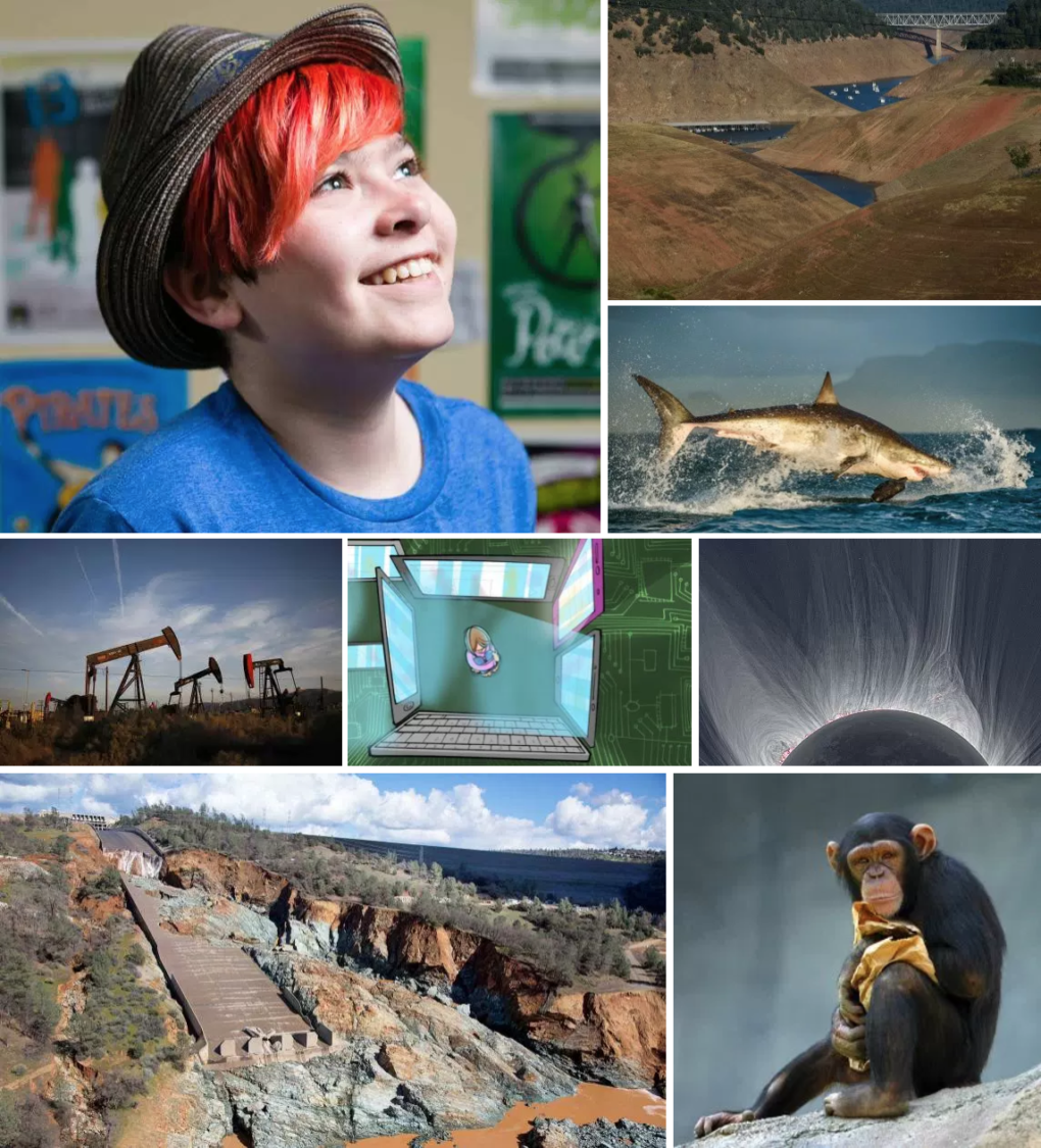 Stories that Taught us Something This Year, Handpicked by the KQED Science Team
