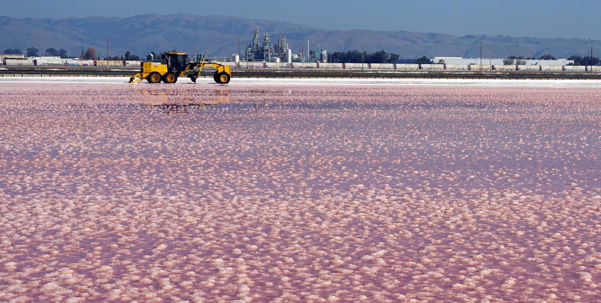 Salt ready for harvest in Newark, California. Lauren Sommer/KQED