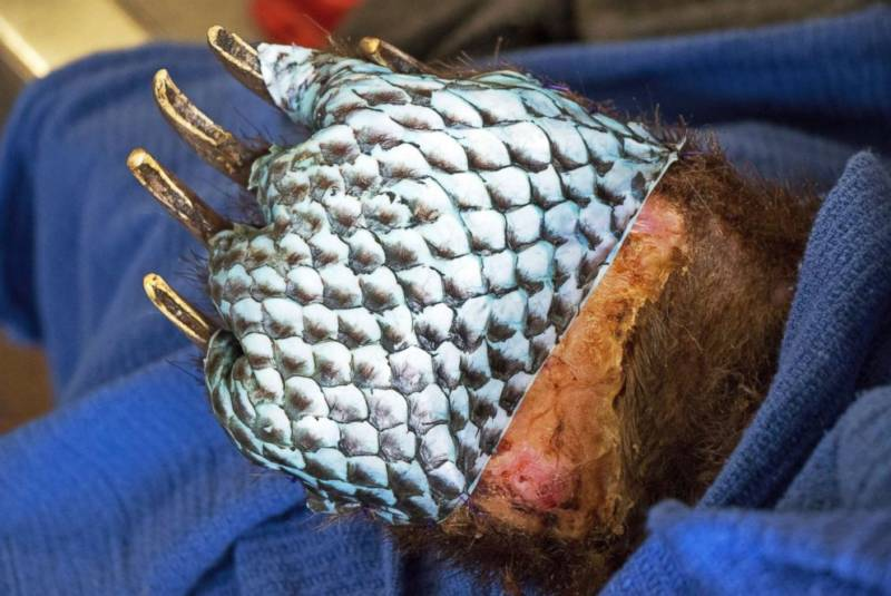 The fish scale pattern from tilapia skin visible on the bottom of the bear's paw.