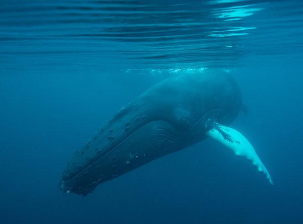 Oil Companies Want to Conduct Seismic Surveys that Threaten Marine Life