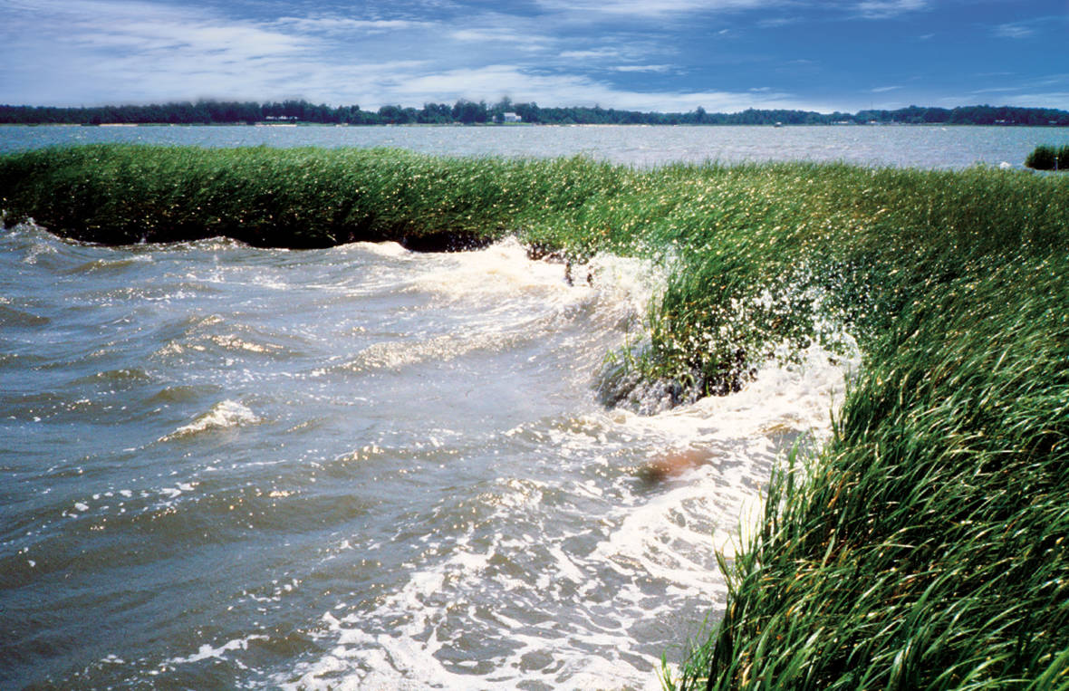 Coastal wetlands protect coastal communities from erosion. NOAA