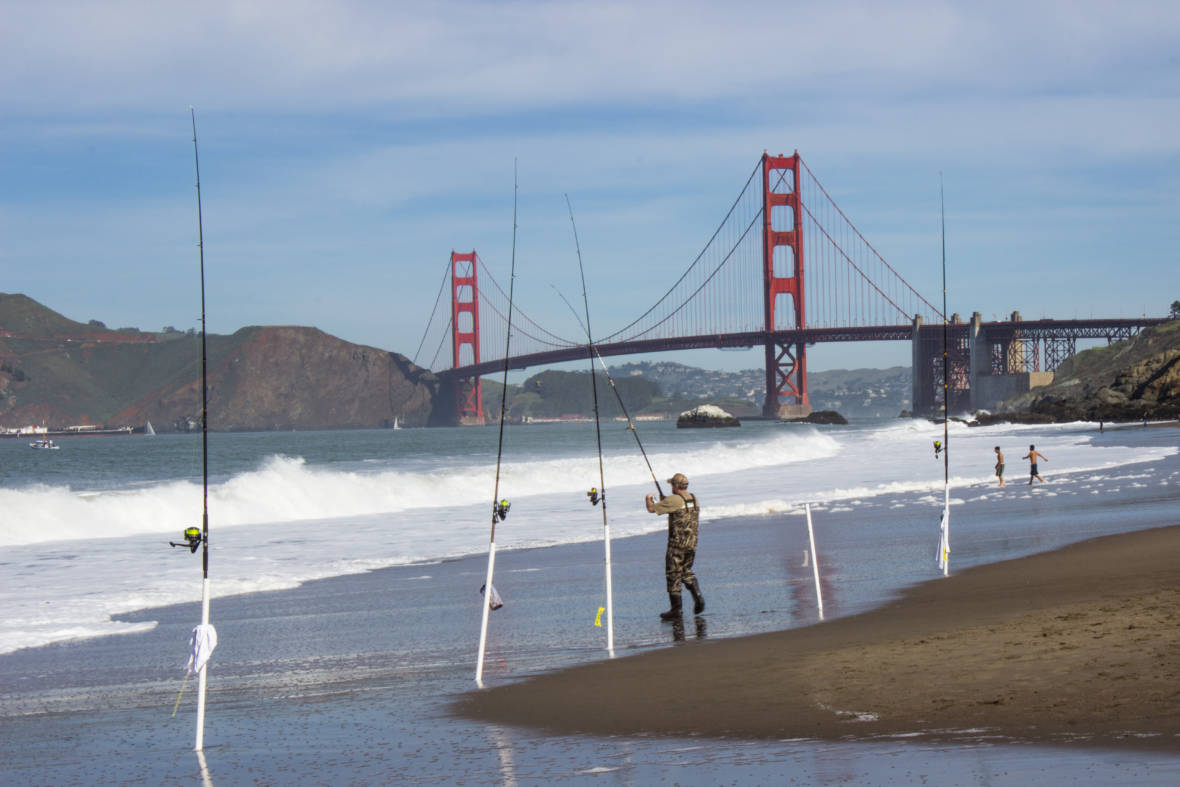 San Francisco Bay Shellfish Are Loaded With Toxins, Study Finds
