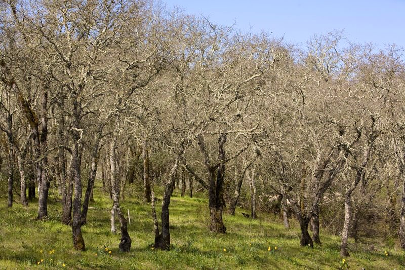 In Napa, Watershed and Woodlands Initiative Clashes With Wineries