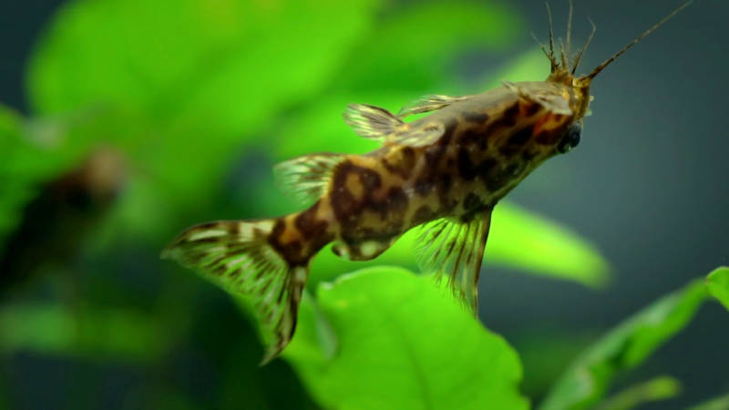 Pet Supplies Fish & Aquariums Aquarium Isolation Box Separation Incubating Box Young Fish Breeding Box Agreeable Sweetness