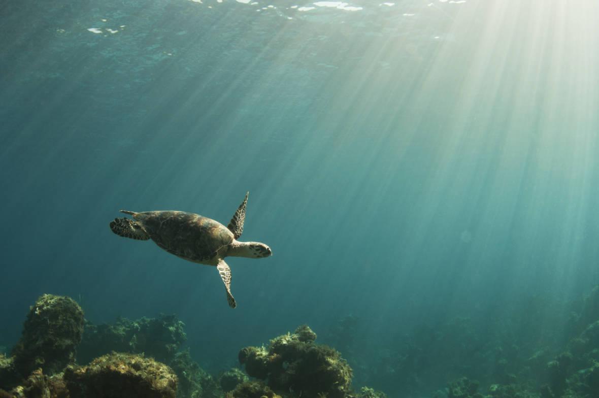 Study: Global Warming is Weakening Ocean Circulation