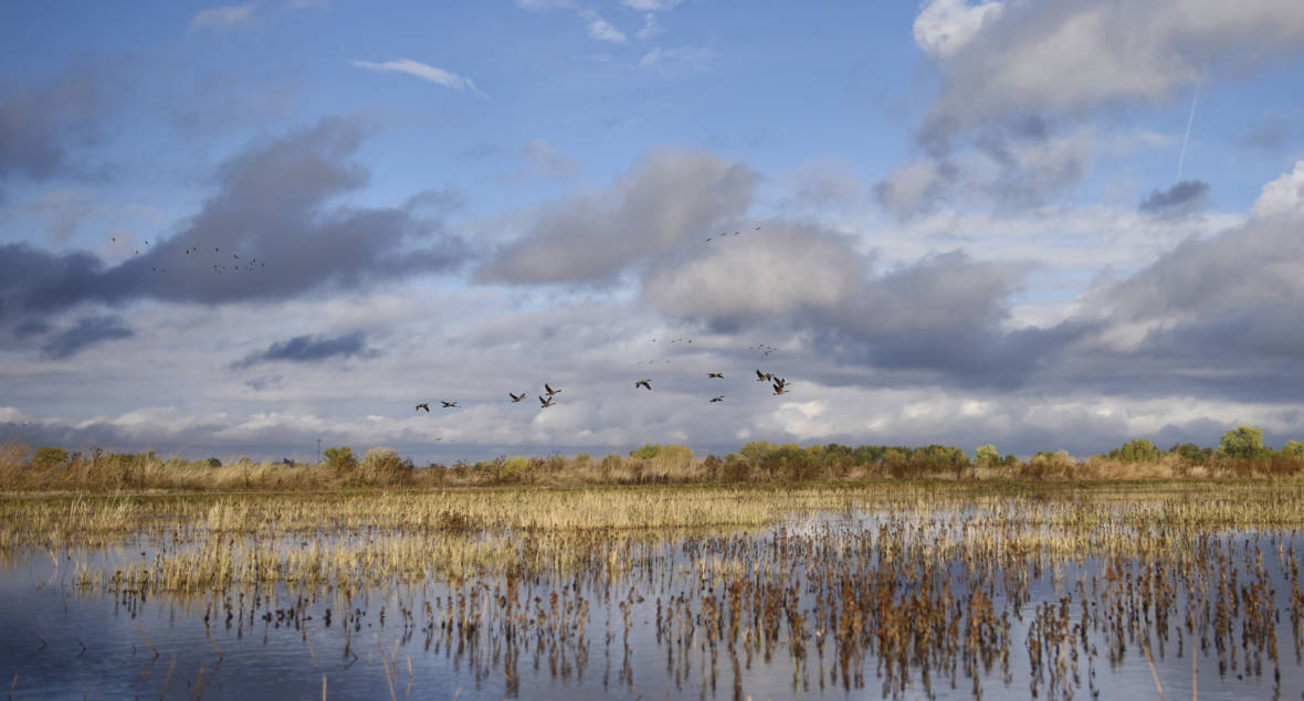 California Poised to Take Action To Protect Wetlands Amid Trump Rollbacks