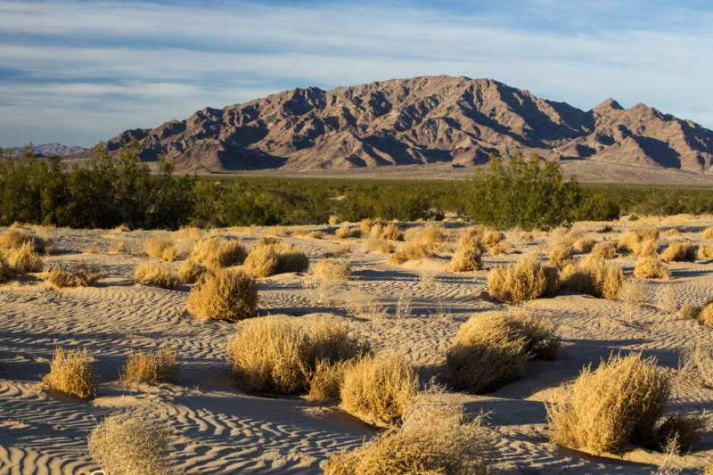 Bird Species Collapse in the Mojave, Driven by Climate Change