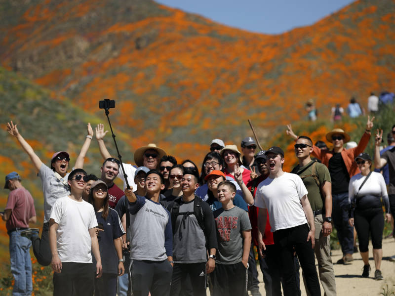 Super Bloom Selfie-Quest Overwhelms Lake Elsinore as 100,000 Descend on 'Poppypalooza'