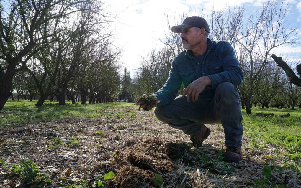 California Has Farmers Growing Weeds. Why? To Capture Carbon