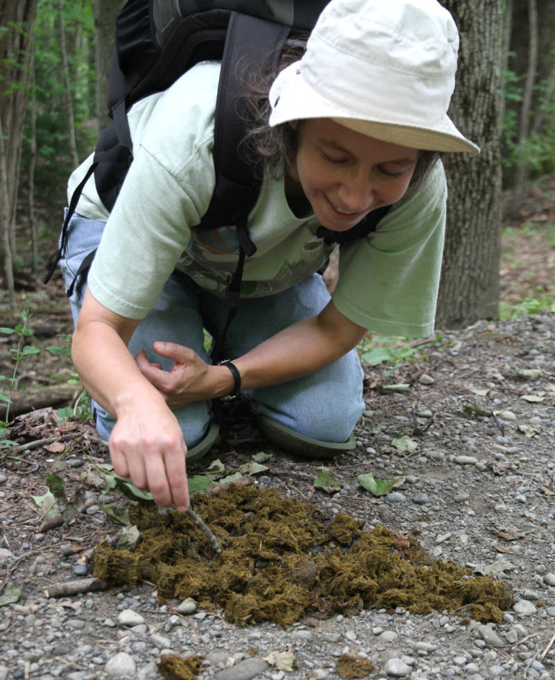 Joyce Gross collecting beetles.