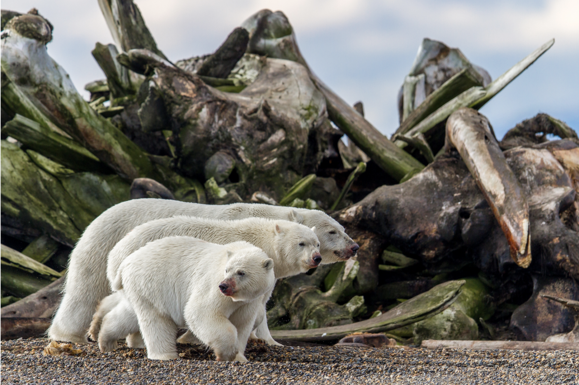 PHOTOS: Here Are Winning Photos From Cal Academy's New Show