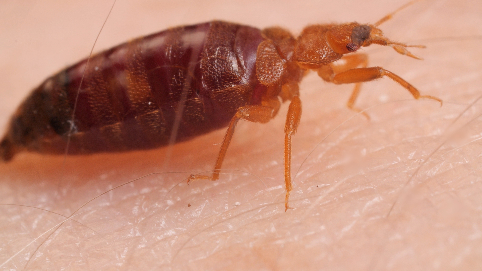 Watch Bed Bugs Get Stopped In Their Tracks Deep Look
