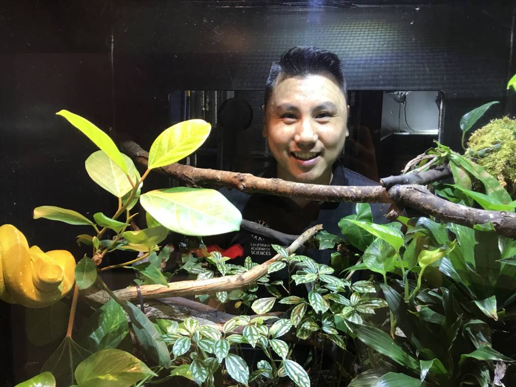 "Patrick Lee, an Animal Care Manager at the California Academy of Sciences, smiles in front of the green tree python featured in the museum's ""Color of Life"" exhibit."
