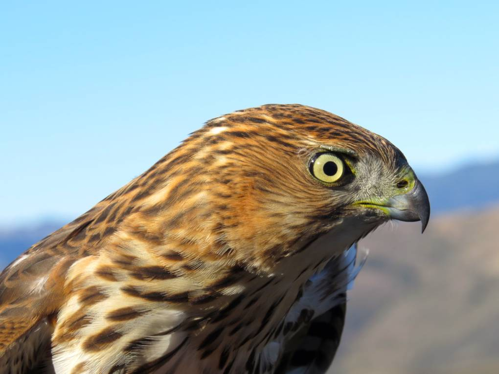 Century-Old Records Show Bird Species Have Seriously Declined in a Hotter Mojave Desert