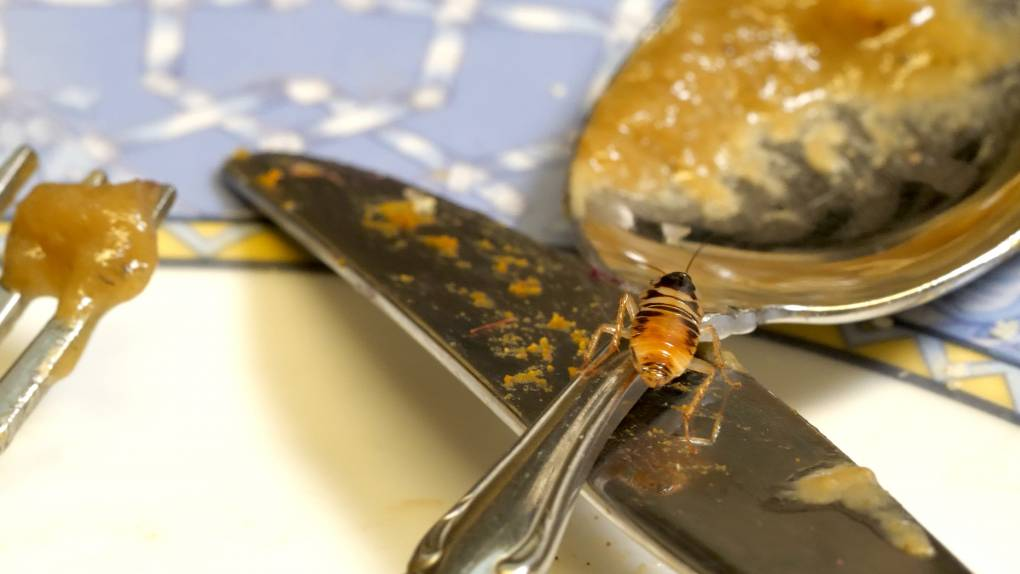 cockroach sits on spoon