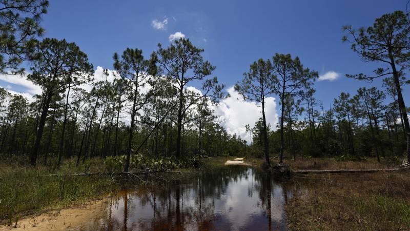 EPA Rolls Back Obama-Era Rules Protecting Rivers and Wetlands
